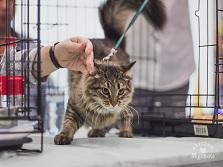 Адреса приютов для кошек список