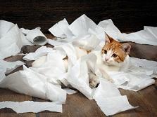 Почему кошки любят бумагу?