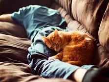 Почему кошки спят в ногах у хозяина? Основные причины