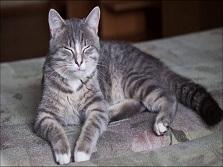 Почему кошки мурлычат и что это значит. Забавные наблюдения