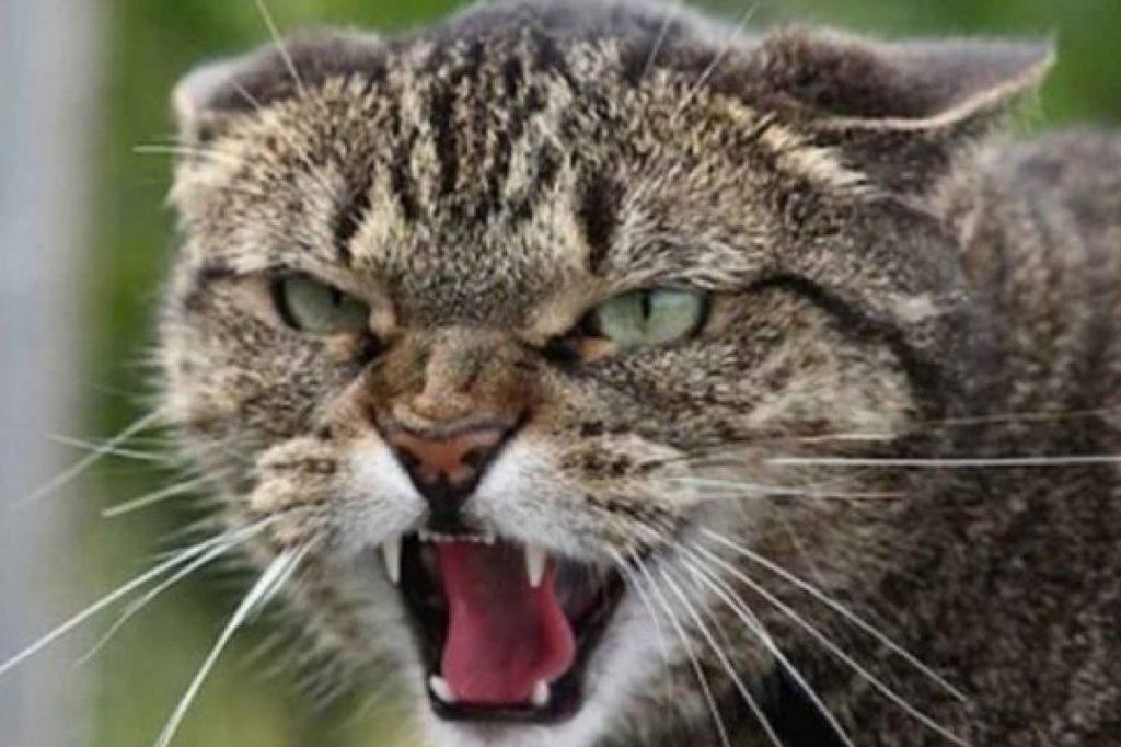 укусила бешеная кошка что делать