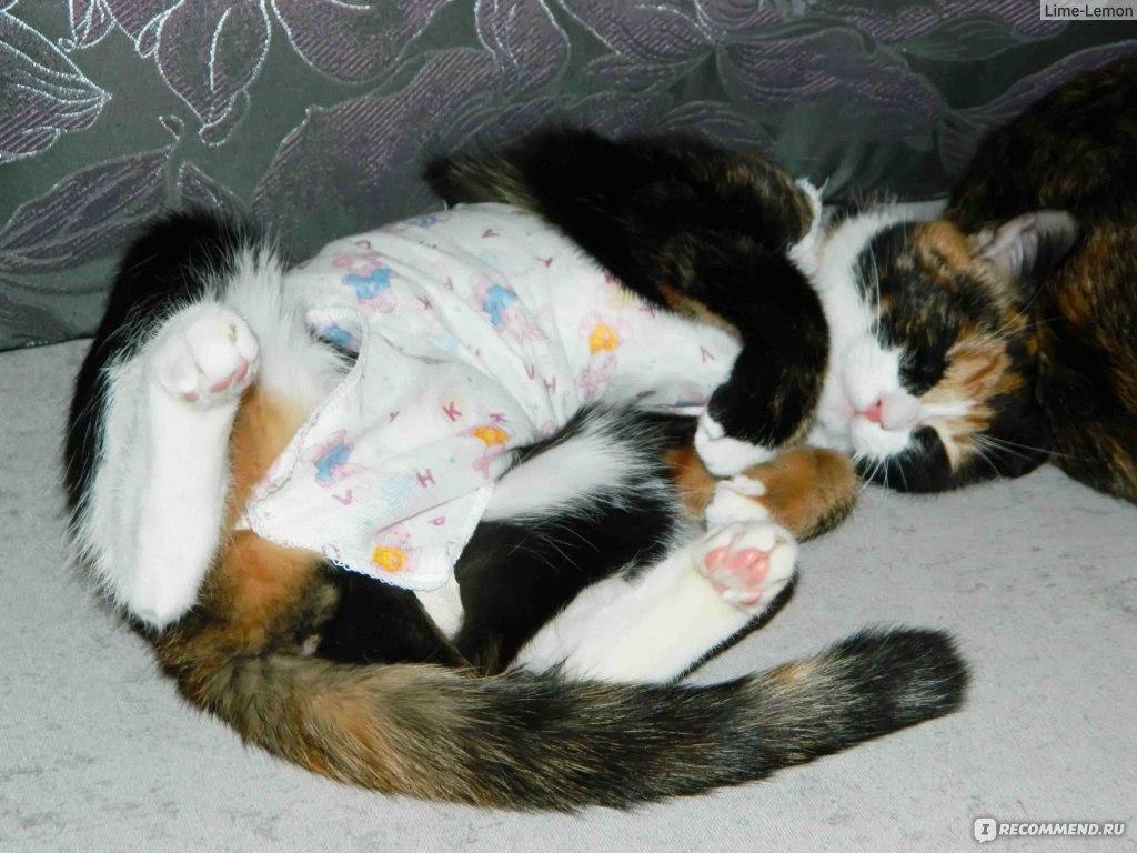 Кошка все время спит
