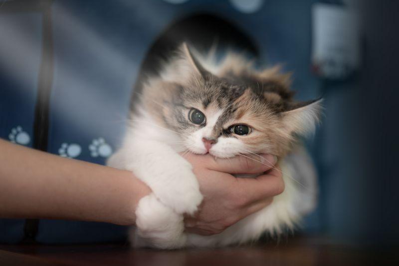 кошка кусает когда ее гладят причины