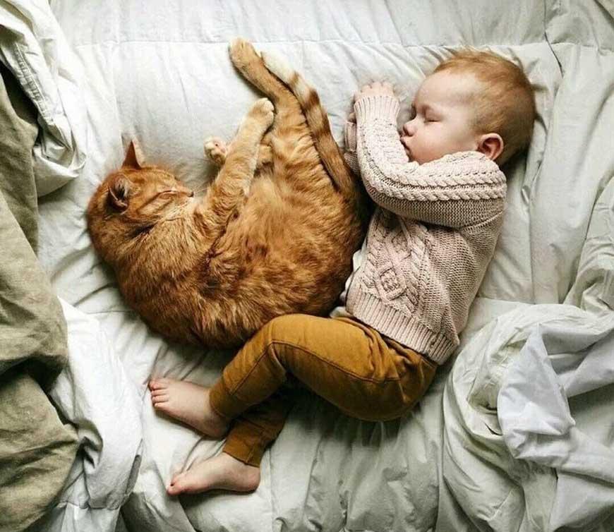 почему кошка спит возле ребенка