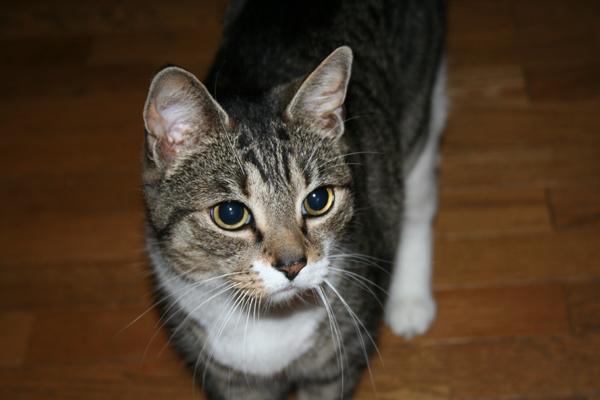 у кошки расширены зрачки из-за нервов