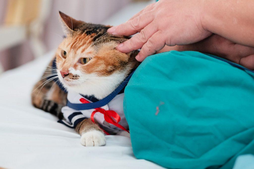 Как лечить рвоту у кошек