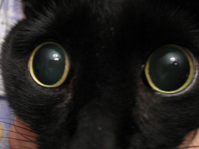 почему у кошки расширены зрачки